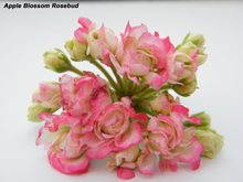 2. Apple Blossom Rosebud