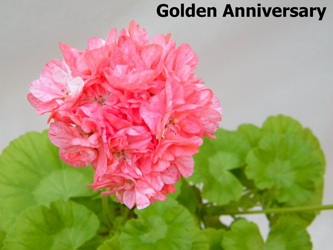 Golden Anniversary (2)