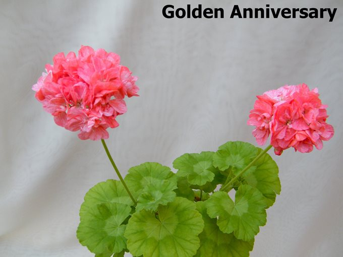 Golden Anniversary (3)