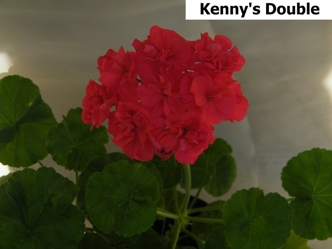 Kenny's Double (1)