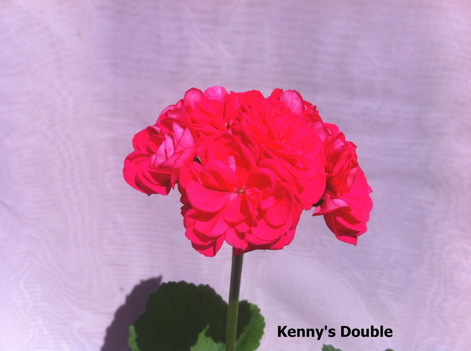 Kenny's Double (9)