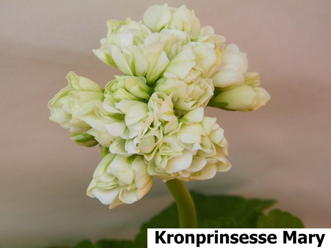 Kronprinsesse Mary (1)