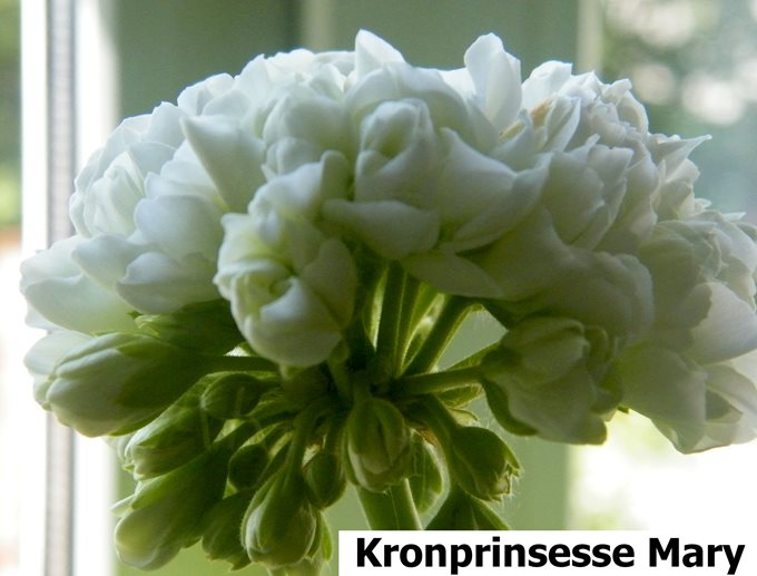 Kronprinsesse Mary (2)