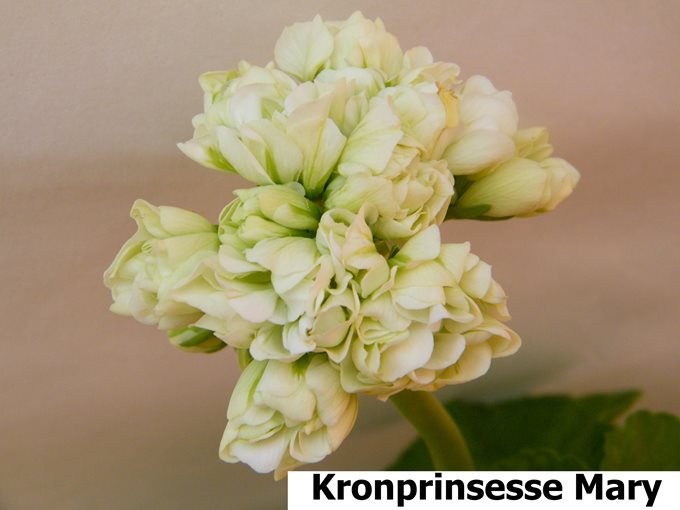 Kronprinsesse Mary 2(3)