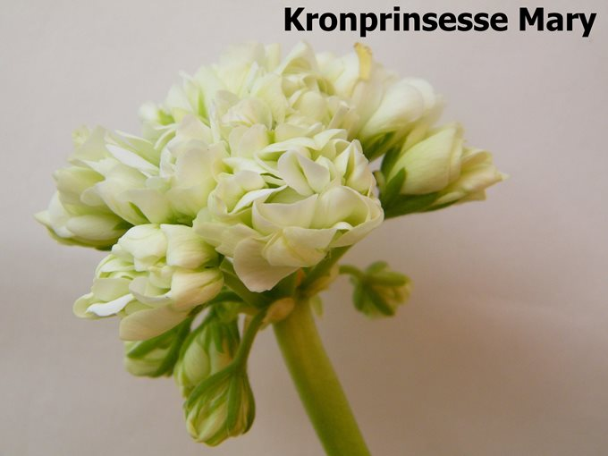 Kronprinsesse Mary2 (2)