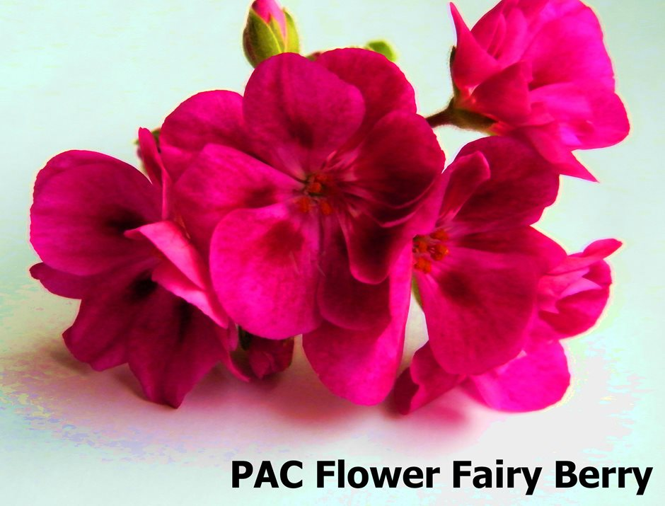 PAC Flower Fairy Berry